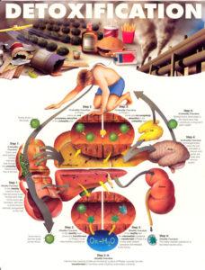 Détoxification